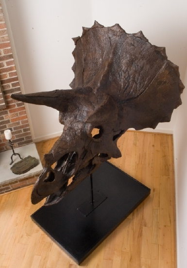 Michael Covel's Triceratops Skull