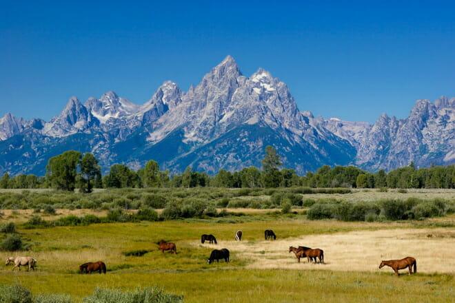 Wyoming Feedback